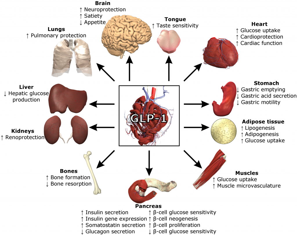 Functions of GLP-1. Source: Wikipedia